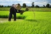 TPPに打克つ日本農業の底力